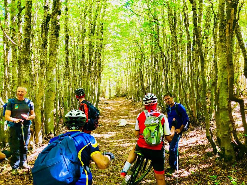 Escursione in MTB Faggeta silana