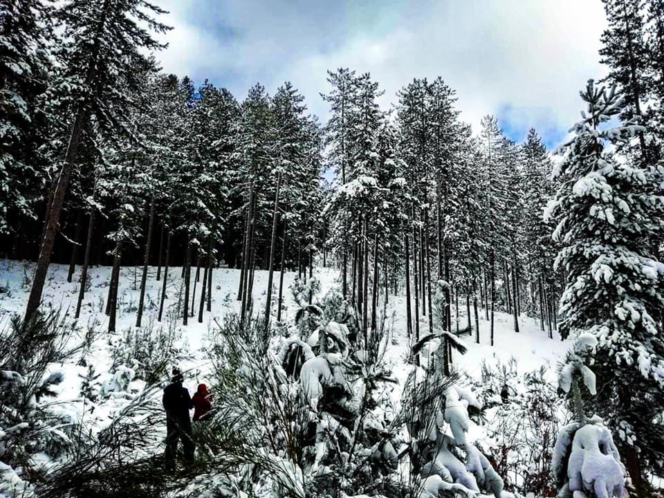 Sciare a Lorica, boschi silani